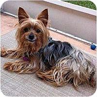Adopt A Pet :: Keebler - St. Petersburg, FL