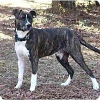 Adopt A Pet :: Cooper - Mocksville, NC