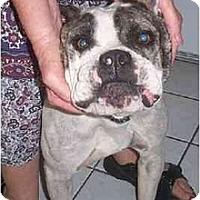 Adopt A Pet :: Mallory - Scottsdale, AZ