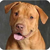 Adopt A Pet :: Gypsy - Chicago, IL