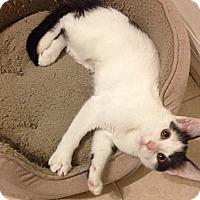 Adopt A Pet :: Maggie - Acme, PA