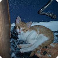 Adopt A Pet :: Monterrey Jack - Tempe, AZ