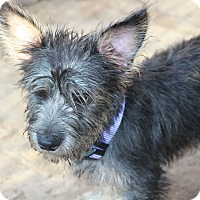 Adopt A Pet :: Willie - adoption pending - Norwalk, CT