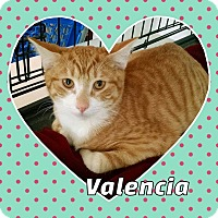 Adopt A Pet :: Valencia - West Lafayette, IN