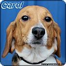 Adopt A Pet :: Carol Brady