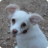 Adopt A Pet :: Kiku - Phoenix, AZ