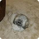 Adopt A Pet :: Moe (COURTESY POST)