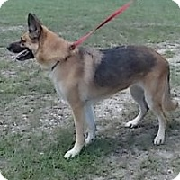 Adopt A Pet :: Cindy Jo - Williston, FL