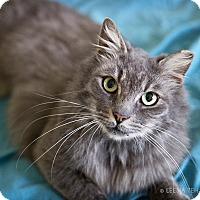 Adopt A Pet :: Jewel - Atlanta, GA