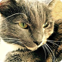 Adopt A Pet :: Heather Willow - Edmonton, AB