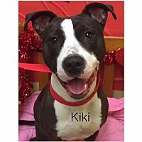 Adopt A Pet :: Kiki - Butler, KY