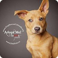 Adopt A Pet :: Leona Zoey - Aurora, CO