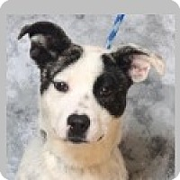 Adopt A Pet :: Ivy - Pittsboro, NC