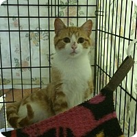 Adopt A Pet :: Butterfinger - Byron Center, MI