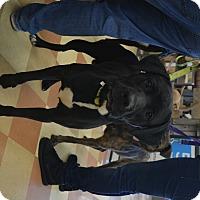 Adopt A Pet :: Duke - Ogden, UT