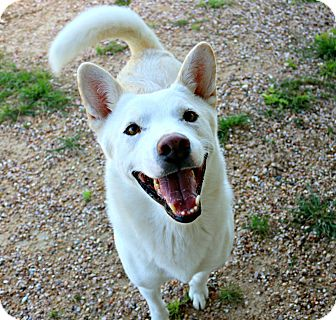 Siberian Husky Mix Dog for adoption in Killeen, Texas - Tundra
