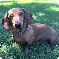 Adopt A Pet :: Tucker - Forest Ranch, CA