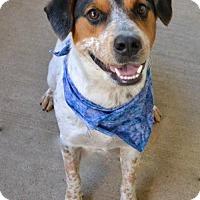 Adopt A Pet :: Lager - McKinney, TX