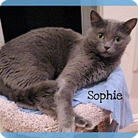 Adopt A Pet :: Sophie - Foothill Ranch, CA