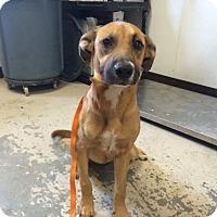 Adopt A Pet :: Pixie - Rockville, MD