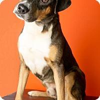 Adopt A Pet :: THUNDER - Roanoke, VA