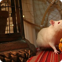 Adopt A Pet :: AMBROSE and MAXWELL - Philadelphia, PA