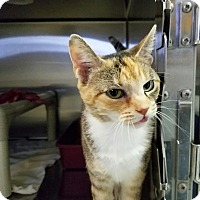 Adopt A Pet :: Sophia - Elyria, OH