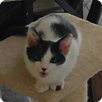Adopt A Pet :: Rascal - Amherst, MA