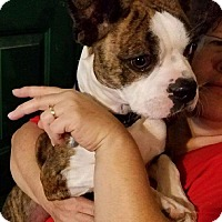 Adopt A Pet :: Jameson - Weatherford, TX