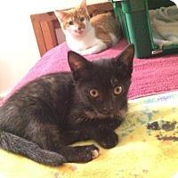 Adopt A Pet :: Liv - Breinigsville, PA