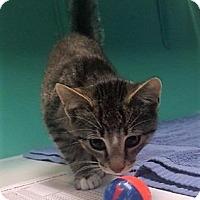 Adopt A Pet :: Johnny - Port Clinton, OH