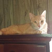 Adopt A Pet :: Rascal - McEwen, TN