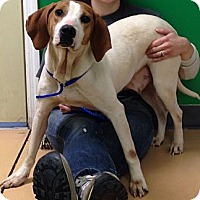Adopt A Pet :: Beatrice- URGENT - Providence, RI