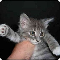 Adopt A Pet :: Sweetie & Precious - Riverside, RI