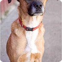 Adopt A Pet :: Ginger - Portland, OR
