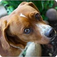 Adopt A Pet :: TRUMAN - san diego, CA