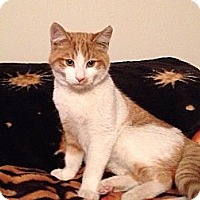 Adopt A Pet :: Moonlite - East Hanover, NJ