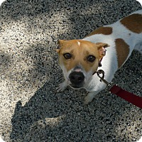 Adopt A Pet :: Lucky Dawg - Wisconsin Dells, WI