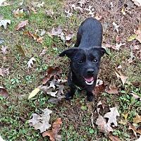 Adopt A Pet :: Bree - Hixson, TN