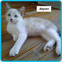 Adopt A Pet :: Aspen - Miami, FL