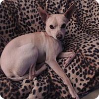 Adopt A Pet :: Pepe - Austin, TX