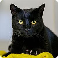 Adopt A Pet :: Prowler - Staunton, VA