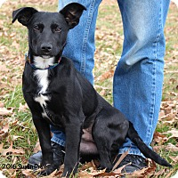 Adopt A Pet :: Danny - Bedford, VA