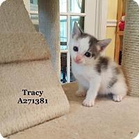 Adopt A Pet :: TRACY - Conroe, TX