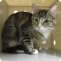Adopt A Pet :: CASA BLANCA - Reno, NV