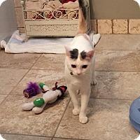 Adopt A Pet :: LEXI - Brea, CA