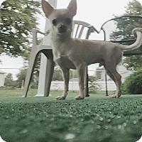 Adopt A Pet :: Sebastian - Zanesville, OH