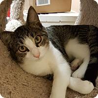 Adopt A Pet :: Paint - Smithfield, NC