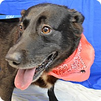 Adopt A Pet :: Brownie - Monroe, MI