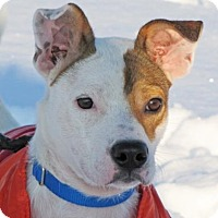 Adopt A Pet :: Boots - Woodstock, IL